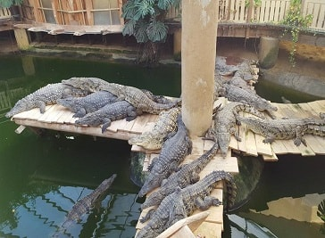 Crocworld in Erfurt